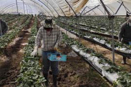 Más de mil personas envían una solicitud a Unió de Pagesos para trabajar en el campo