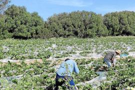 El 80 % de las solicitudes de empleo a Unió de Pagesos son trabajadores de hostelería