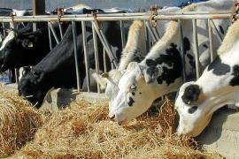 Agricultura inicia la compra pública del excedente de productos lácteos de la Isla