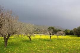 Este es el tiempo que hará en Mallorca el primer día que los niños puedan salir