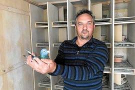 Pep Mahindo: «Habrá más palomas adultas en las primeras sueltas tras esta crisis»