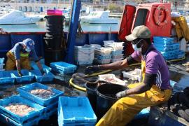 Los pescadores de Cala Rajada reducen su actividad a la mitad por el coronavirus