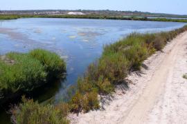Un estudio detecta vida en el «ambiente extremo» de las salinas de es Trenc