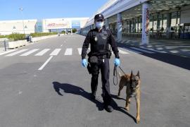 La Unidad Canina de la Policía Nacional: el olfato contra las bombas y las drogas