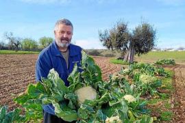 Francesc Nicolau: «Las albahacas de hoja pequeña de Mallorca desaparecerán»