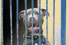 Mallorca exporta las mascotas abandonadas al extranjero