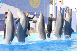 exhibición Marineland delfines