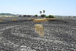 Un año después del gran incendio, los afectados aún esperan las ayudas