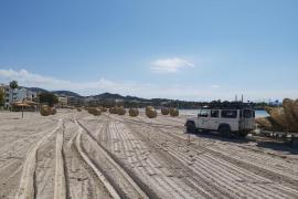 Alcúdia comienza a instalar las sombrillas para abrir las playas el 8 de junio