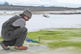 El cambio climático 'colorea' de verde la Antártida