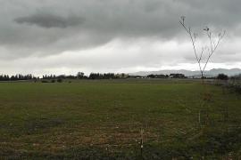 El Govern aprueba el decreto que impide construir en suelo rústico