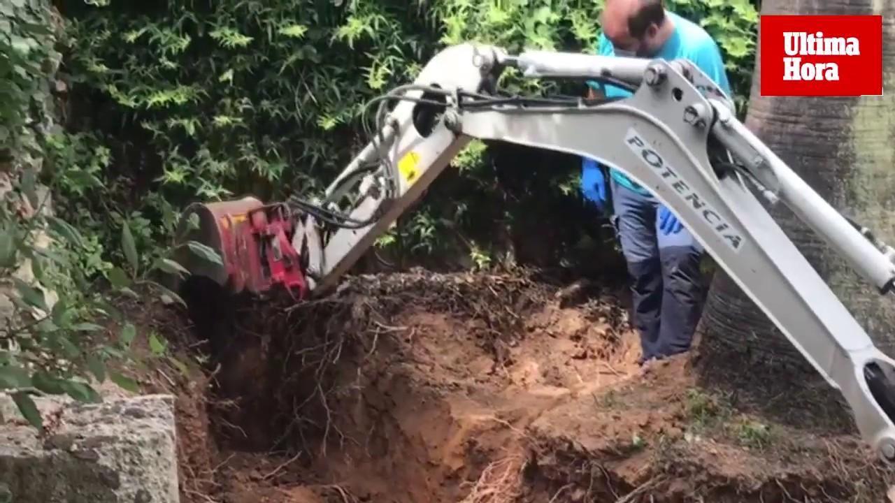 Retoman la exhumación de la fosa de Sencelles