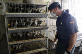 La Guardia Civil intensifica los controles a animales en Mallorca por la pandemia