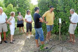 Primera experiencia en el Valle de Sóller para producir cítricos de cultivo ecológico