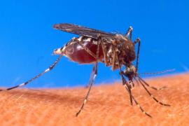 Acaba en Urgencias tras recibir 45 picaduras de mosquitos