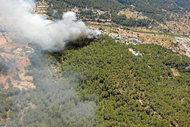 El abandono del bosque de Baleares prende la llama