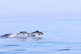 Una imagen de varios delfines.