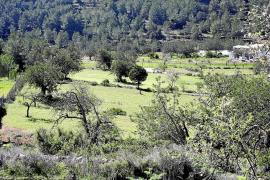El Govern defiende la voluntad «nítida» del decreto de protección del territorio de preservar el suelo rústico