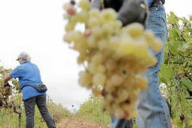 Vitivinicultura, de tradición a estudios reglados