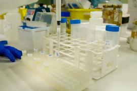 Dan negativo las PCR de los 40 migrantes llegados en patera a Mallorca y Cabrera