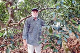 Nicolau Cortès Mayol: «El aguacate es un cultivo que ningún seguro quiere cubrir»