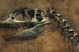 Hallada la causa definitiva de la extinción de los dinosaurios