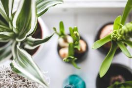 Con agua, leche, cerveza... ¿Por qué es beneficioso limpiar las hojas de las plantas de interior?