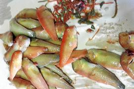 La falta de vigilancia propicia la pesca furtiva en aguas del parque de Cabrera