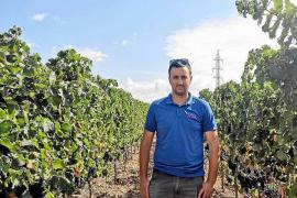 Juan Carlos Batle Vallés: «Esta cosecha es la mejor que hemos tenido en años en cuanto a calidad»