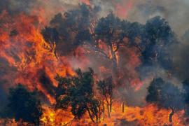 Dos incendios en Alt Empordà se cobran tres vidas y devastan 13.000 hectáreas