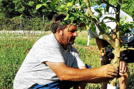 Raixa recupera variedades locales de cítricos