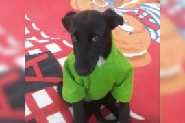 Tabata, una perrita rechazada por tres familias por ser de color negro