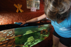 30 años de acuario y una vida dedicada al cuidado del mar pitiuso, en imágenes (fotos: M. Sastre)