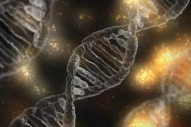Logran la primera secuencia completa del cromosoma X humano