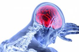 Qué es y qué origina el síndrome de Klüver-Bucy, un trastorno que provoca una grave alteración de la conducta