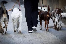 Las sanciones en España por abandonar un perro o cualquier otro animal