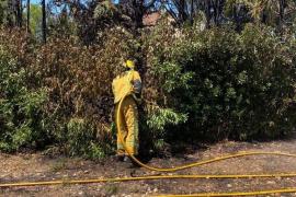 Incendio de vegetación en Establiments