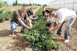 Sa Nostra recibe ofertas interesadas en adquirir la finca agrícola Sa Canova de sa Pobla