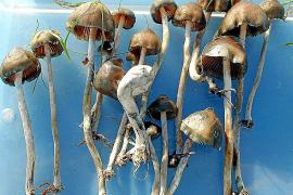 Desarticulado un punto de venta de setas alucinógenas en Santa Catalina