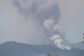 Un incendio intencionado quema diez hectáreas de zona boscosa en Son Vida