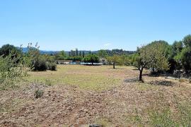 Selva compra una finca que permitirá al fin la construcción de la nueva escuela de Caimari