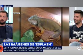 Diego Revuelta recuerda la experiencia de tener un reptil como mascota