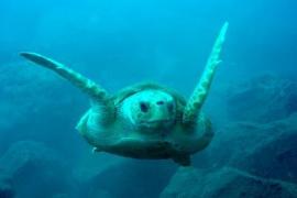 Pescadores salvan a una tortuga atrapada con plástico en la costa de Menorca