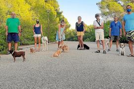 Sociabilizar con perros