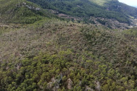 El Govern pedirá declarar zona catastrófica las áreas de Mallorca afectadas por el temporal
