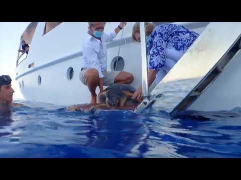 La reina Sofía participa en la liberación de una tortuga en Mallorca