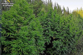 La Guardia Civil detiene a un hombre que tenía una plantación de marihuana camuflada en Artà