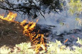 Continúa la oleada de incendios en Mallorca
