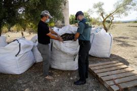 La Guardia Civil vigila el 'oro negro' mallorquín