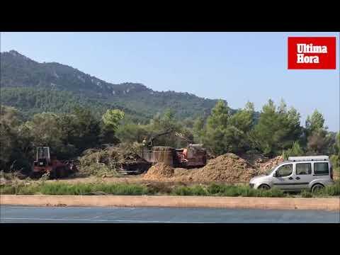 Biomasa, cuando el desastre propicia otras oportunidades